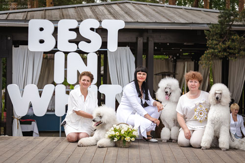 Best kennel - dog kennel ATAMI!